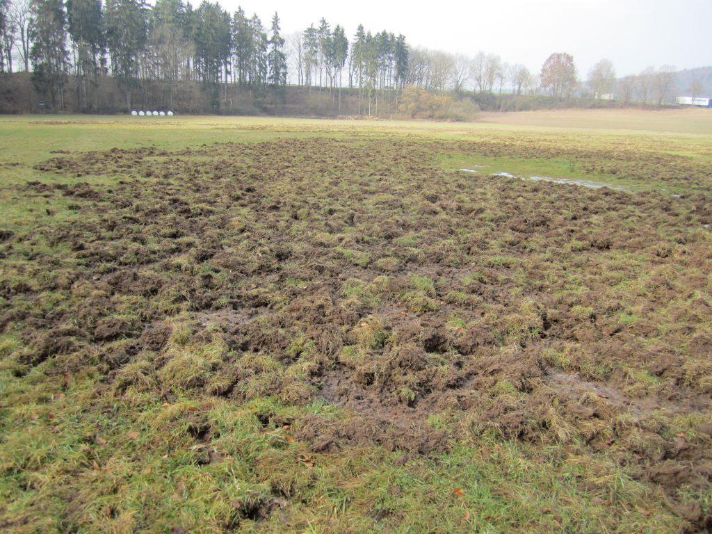 Solche Wildschäden können im Winter auch nach 4 Monaten noch eindeutig als Wildschäden indendifiziert werden.        Foto: Dr. Lißmann